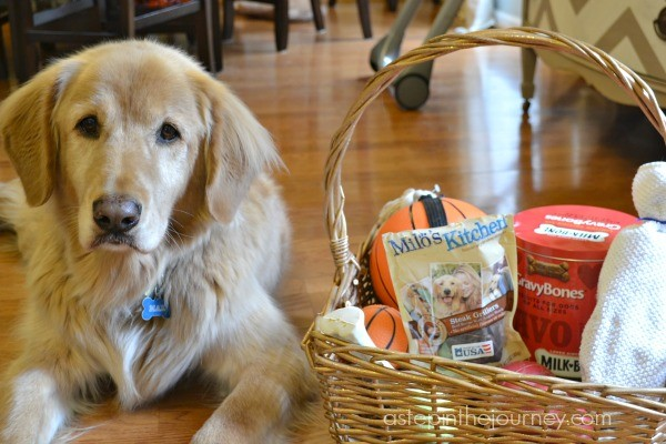 doggie_gift_basket
